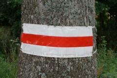 Koroblask na drzewie
